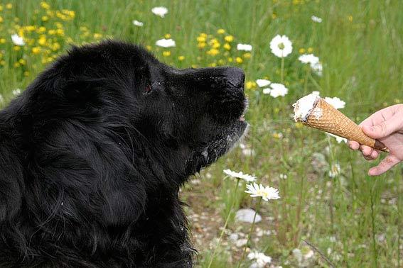 Was Dürfen Hunde Nicht Essen Achtung Giftig