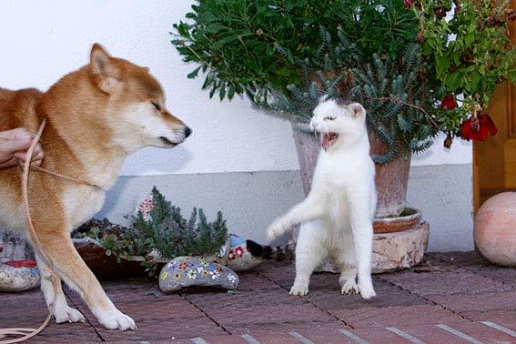 hund und katze aneinander gewöhnen  die tierexperten