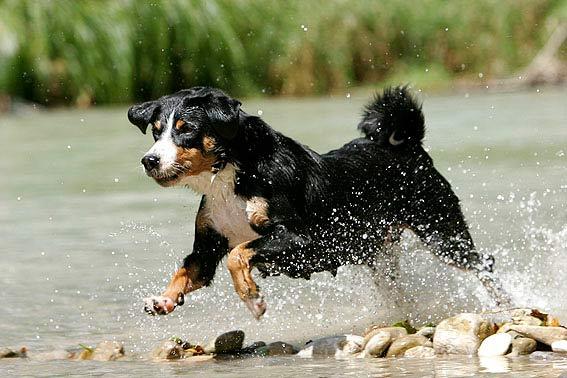 Gro 223 E Hunderassen Bilder Von Xxl Hunden