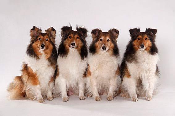 Kleine Hunderassen Viele Bilder Super Tipps