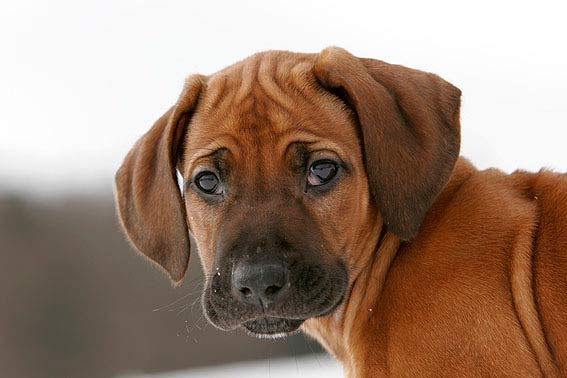 Dog Breeds Pictures As Puppies