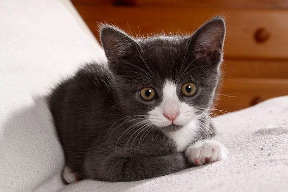 kitten kaufen tipps f r zuk nftige katzenbesitzer. Black Bedroom Furniture Sets. Home Design Ideas