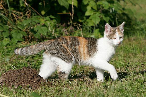 Katze steckbrief