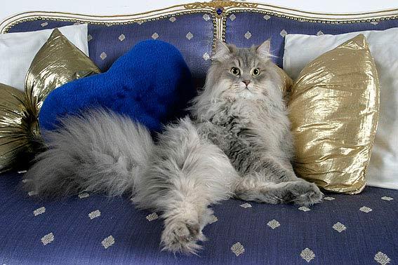 lustige katzenbilder mit witzigen spr chen zum lachen. Black Bedroom Furniture Sets. Home Design Ideas