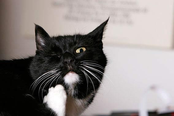 lustige katzenbilder mit witzigen spr chen. Black Bedroom Furniture Sets. Home Design Ideas