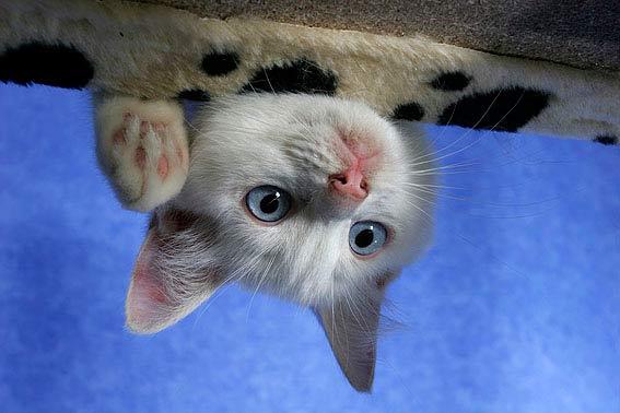lustige katzen videos zum - photo #44