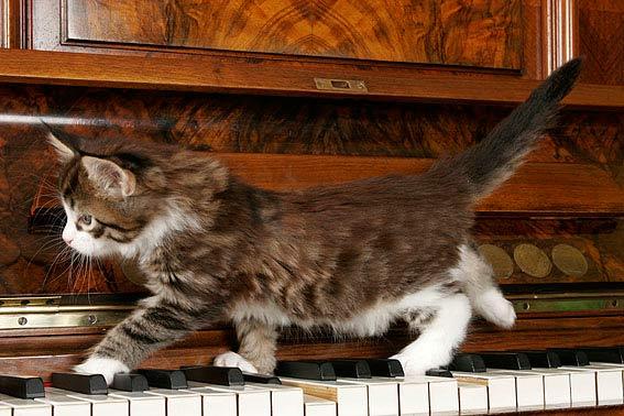 Maine Coon Kitten Tipps Und Susse Fotos Die Tierexperten