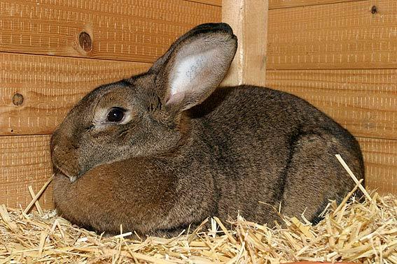 Kaninchen kaufen - Unsere Tipps | Die TIEREXPERTEN