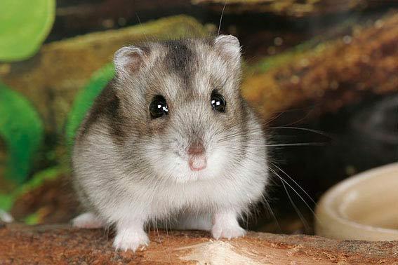 Weibchen hamsternamen Hamster Namen