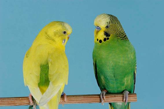 vogelnamen die sch nsten namen f r v gel. Black Bedroom Furniture Sets. Home Design Ideas
