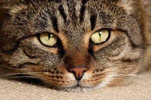 katzengesundheit tierportal animals digital. Black Bedroom Furniture Sets. Home Design Ideas