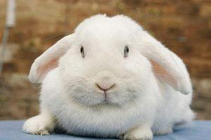 Kaninchennamen Suss Cool Witzig Die Tierexperten