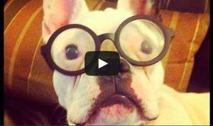 Tier videos kostenlos lustige Descubre los