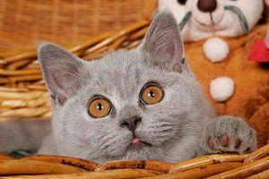Katzennamen weiblich männlich süß & cool!