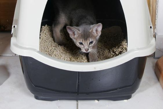 Kleines Katzenklo katzenklo die besten tipps rund um die katzentoilette