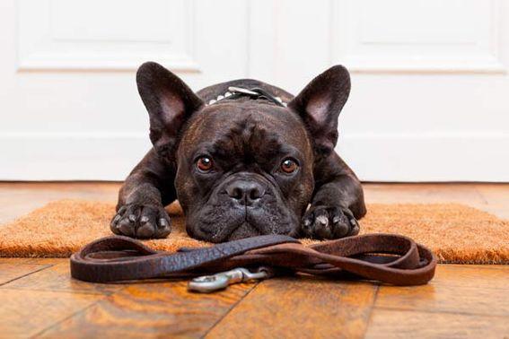 Hundehaltung In Der Mietwohnung Was Beachten